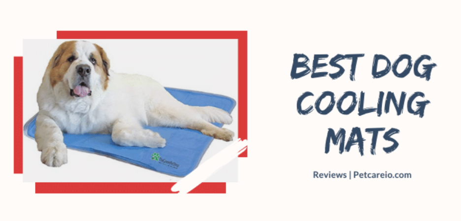Best Dog Cooling Mats Pads Hot Summer Cool Your Dog Dog