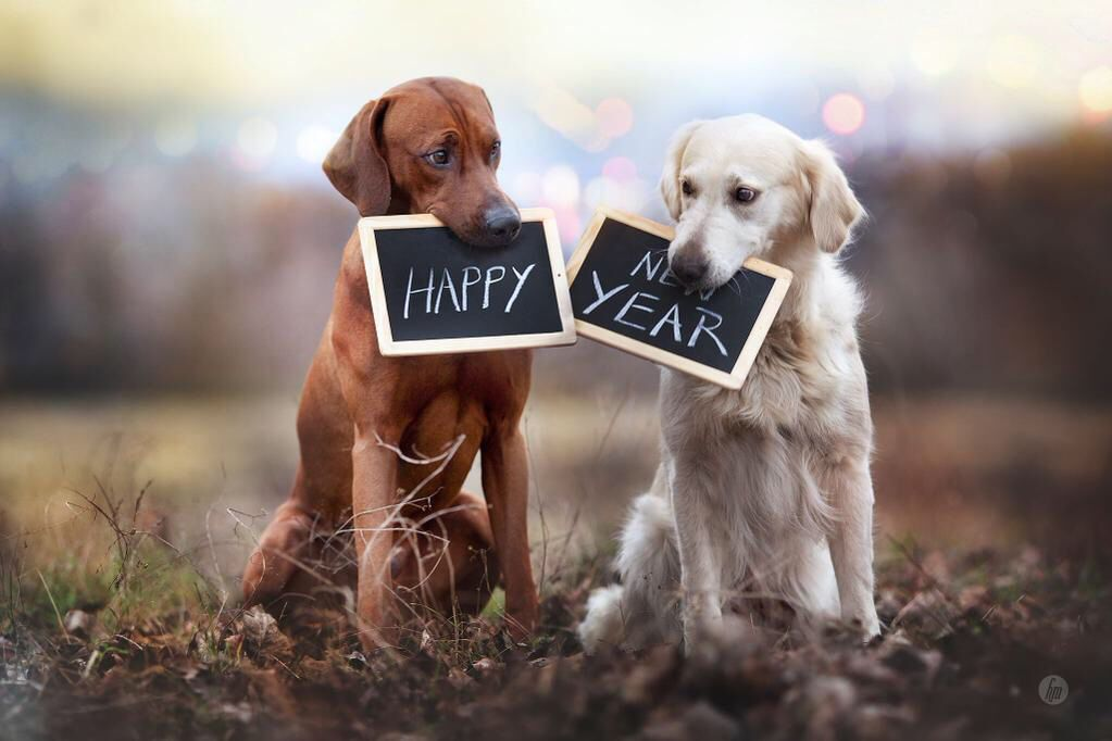 Happy New Year New Year Bonne année, Animaux