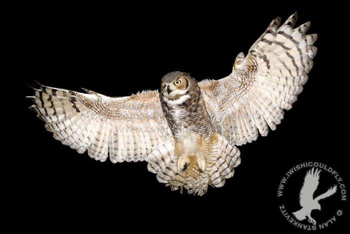 Great Horned Owl Flying Tattoo great horned owl in fl...