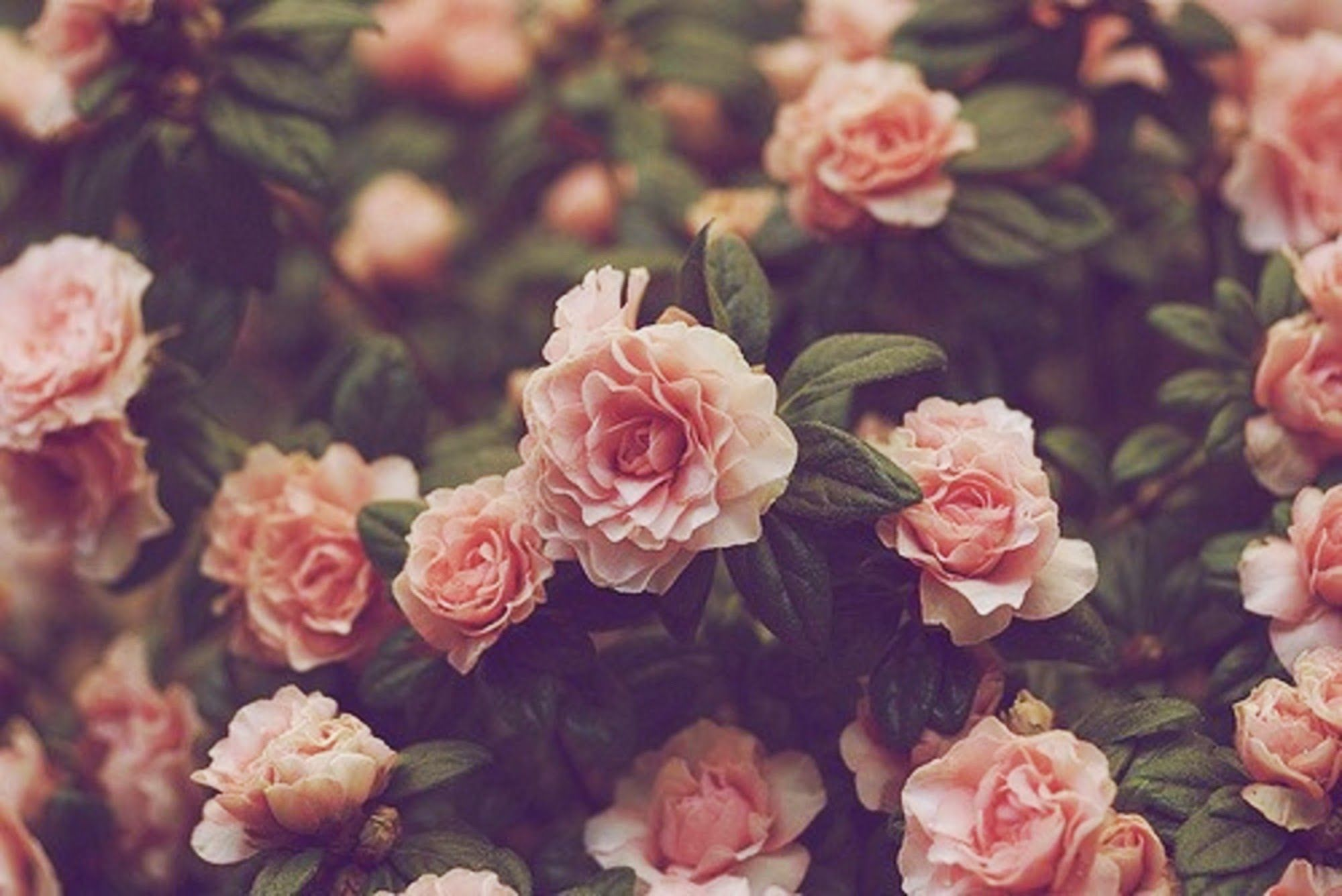 Hd Vintage Flower Backgrounds Vintage Flowers Wallpaper Flower