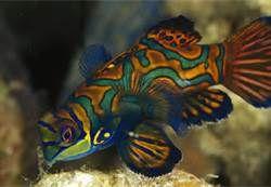fish - Bing Images