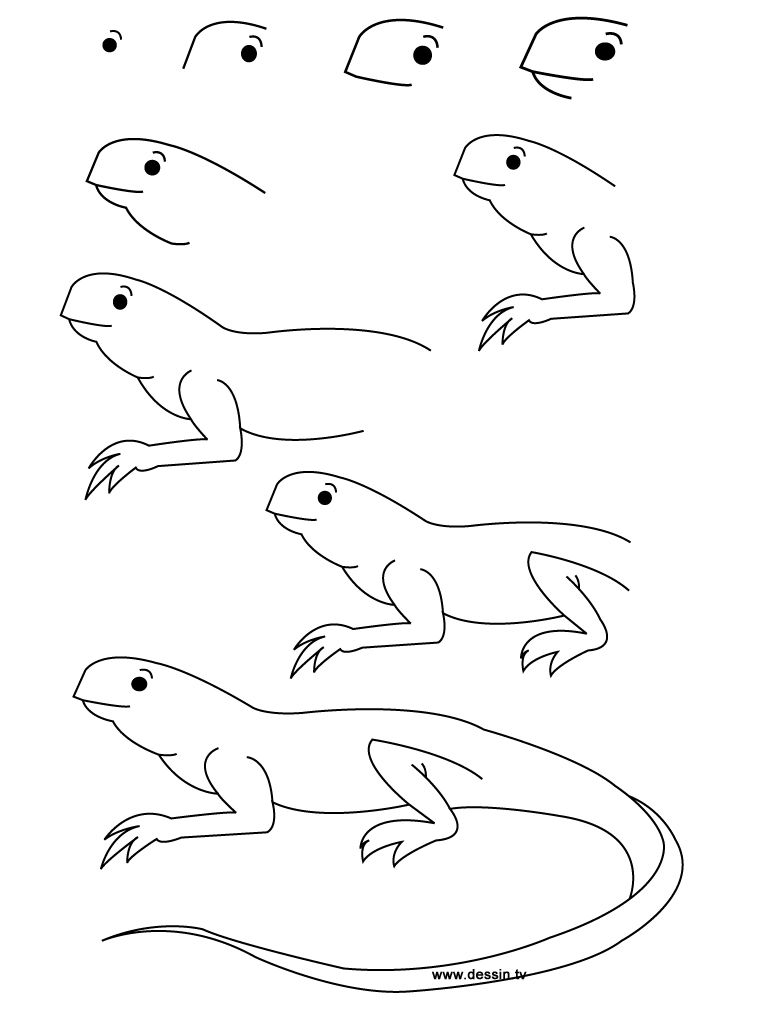 here you can find some new design about how to draw a lizard step by