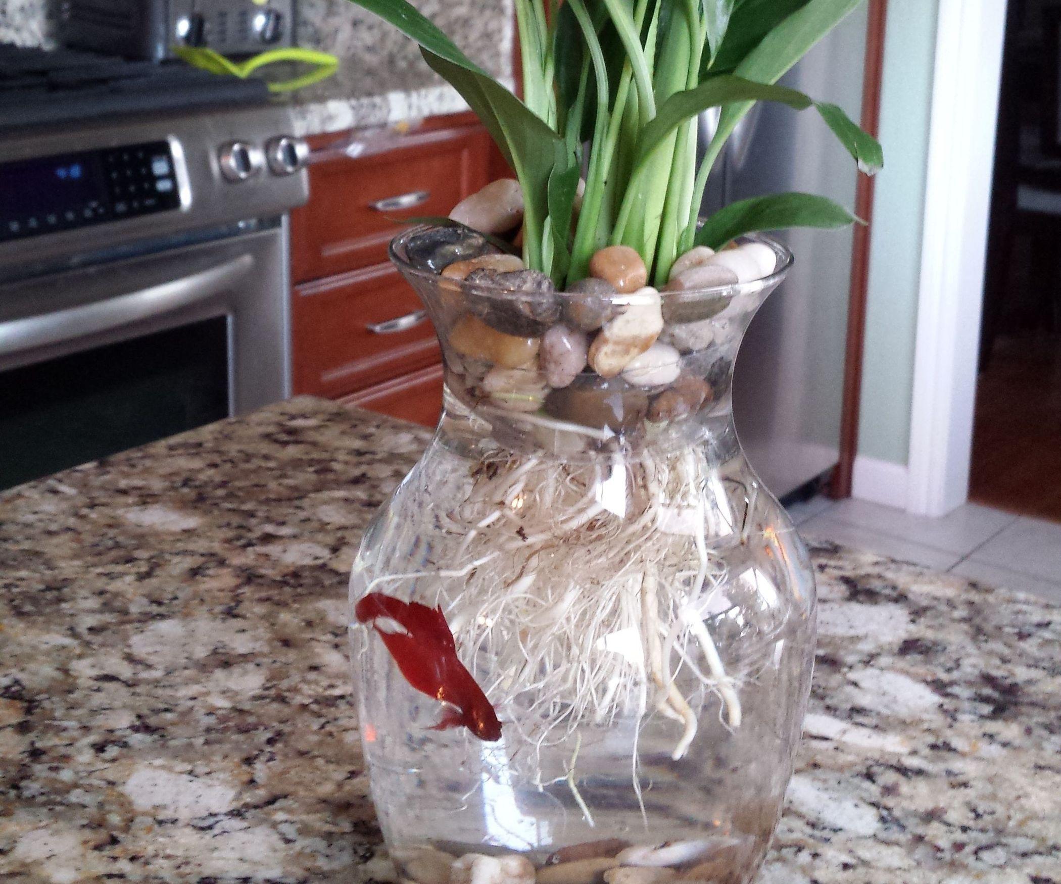 $8 Betta Fish & Flower Vase   Super simple, Betta and Betta fish