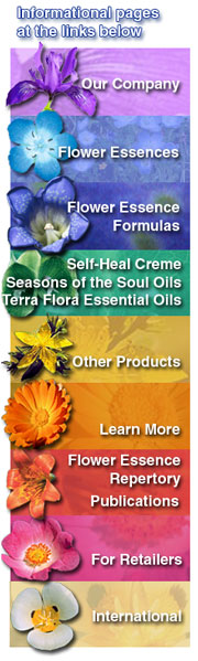 Fes Flower Essences Flower Essences Flower Essences Remedies Bach Flower Remedies