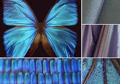 Nature - The philosophy of Biomimicry @tamara matthews-stephenson (NestbyTamara)
