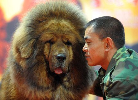 Tibetan Dogs Are One The Big And Most Famous Dog Breed In