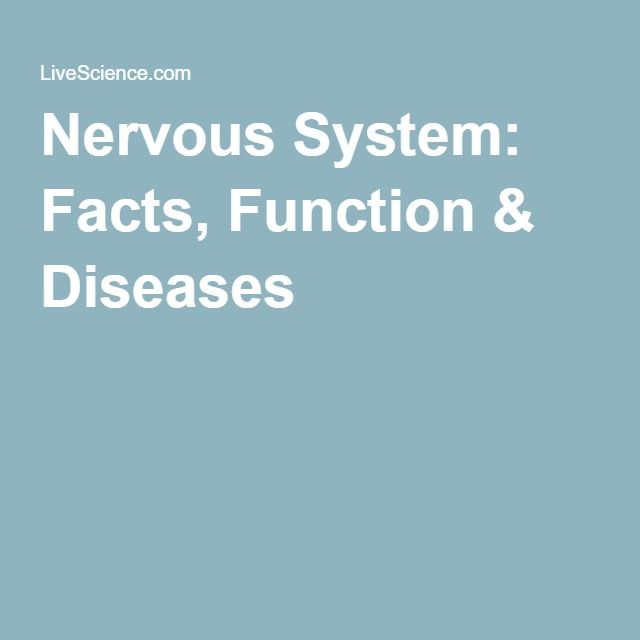 Nervous System: Facts, Function & Diseases | Nervous system and ...