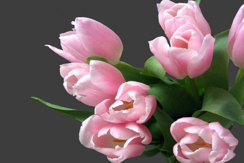 Download wallpaper id desktop nexus nature tulipanes