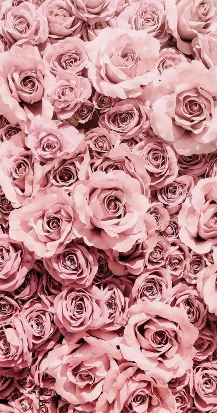 Pretty Pink Mauve Roses Roses Phone Wallpaper Pink Rose Gold Aesthetic Flower Phone Wallpaper