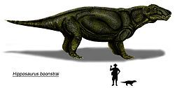 Hipposaurus boonstrai copia