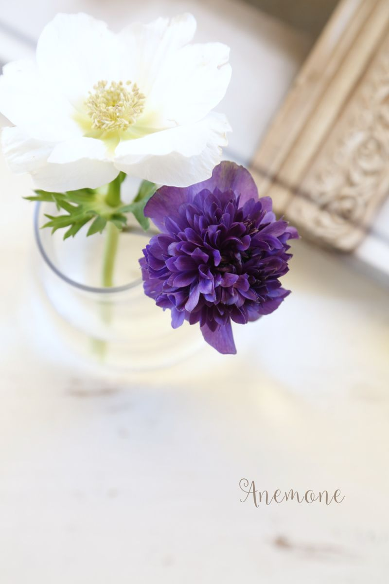 ANEMONE|Enjoy the Little Things