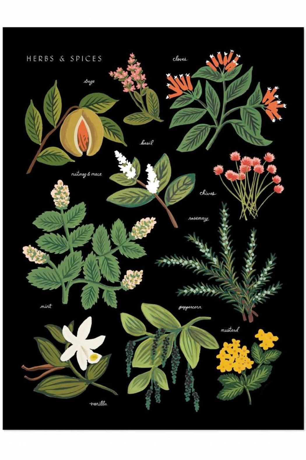 """18 x 24"""" Print Illustrated Art Print created from an original gouache painting by Anna Bond.  Herbs & Spices Print by Rifle Paper Co. . Home & Gifts - Home Decor - Wall Art Austin Texas"""