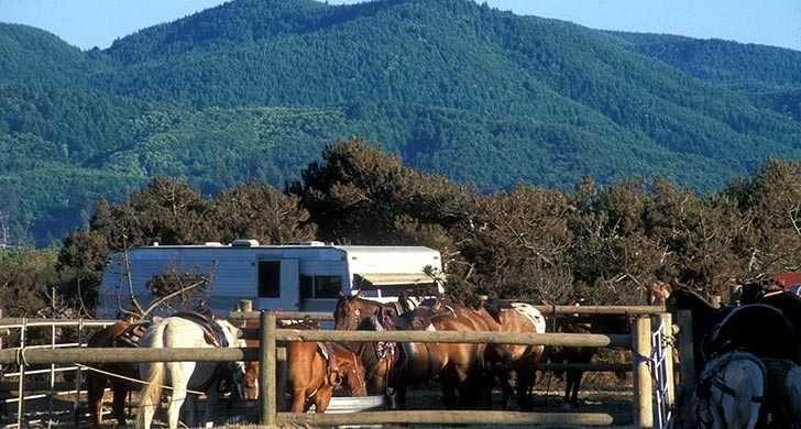 Nehalem Bay State Park Oregon State Parks And Recreation Scenic Rv Campgrounds State Parks Nehalem Bay Horse Camp
