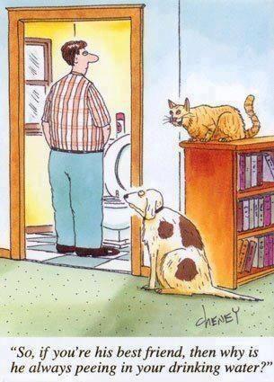 Funny Dog And Cat Cartoon Funny Cartoon Pictures Cartoon Jokes