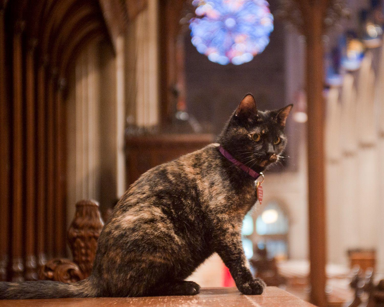 Carmina the Cathedral Cat Cats, Tortoiseshell cat names
