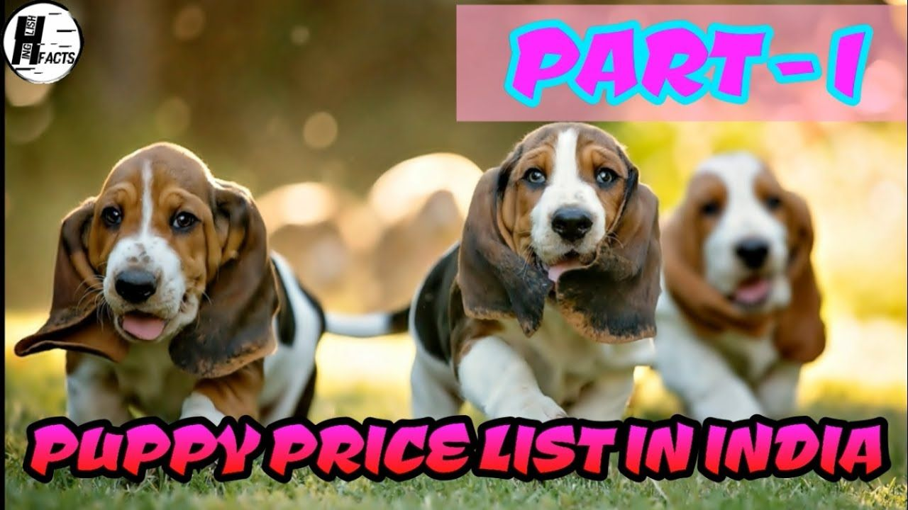 Dog Price List In India Part 1 Price List Hinglish Facts Ammu S Pets Kennels 08071264651 Established In The Year 3 In 2020 Puppies Funny Dog Price List Pets For Sale