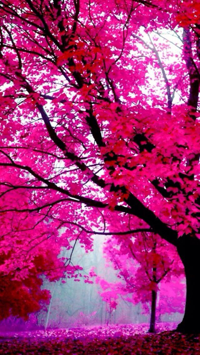 Cute Hot Pink Background For Iphones Tree Wallpaper Pink Tree