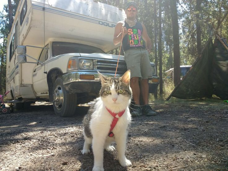 14 tips that every cat owner should know RVing with cats can be a challenge but also very  14 tips that every cat owner should know RVing with cats can be a challenge but...