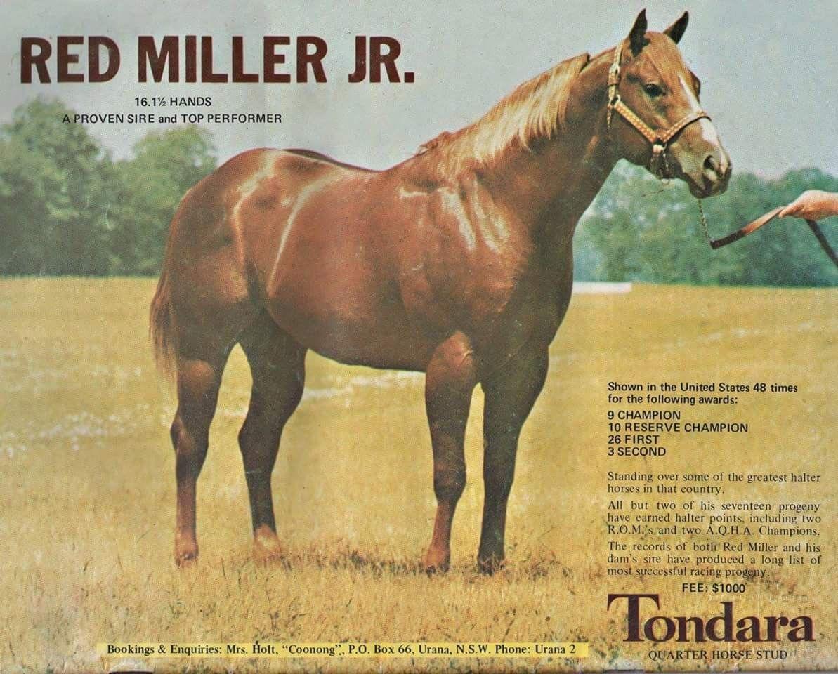 Red Miller Jr Legends Pinterest Horses American Quarter Horse