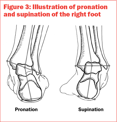 Pronation and supination of the right foot | Voettype, stand en ...