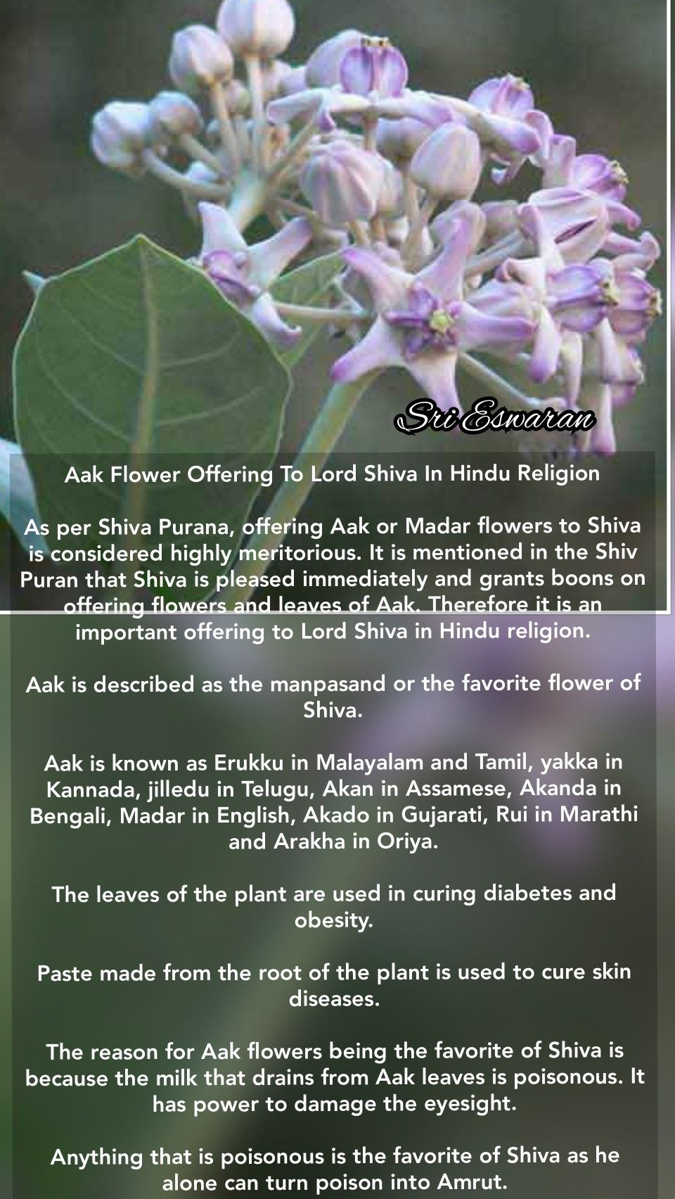 Pin On Eswaran Remedies
