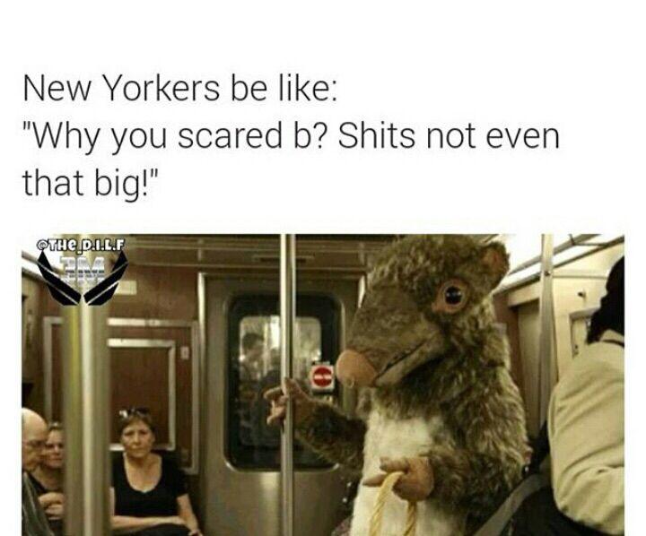 Newyork Rats Funny Lol Lmfao Funny Stuff Lol Funny Memes