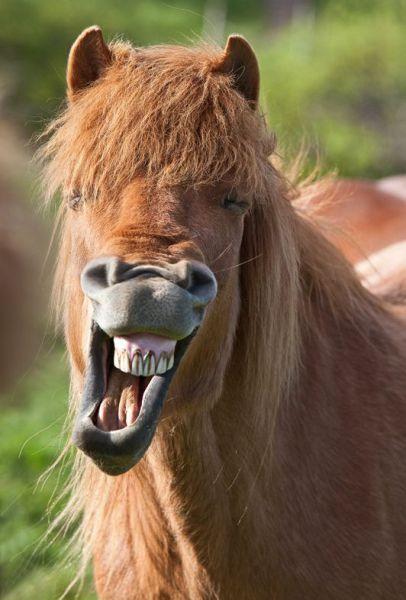 Izismile Com Daily Picdump Weekend Edition 72 Pics Fotos Divertidas De Animales Mascotas Memes Ojos De Animales