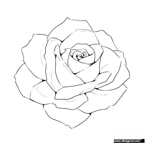 Rose Line Drawing Template Flower Drawings Drawing Templates Rose Art Drawing