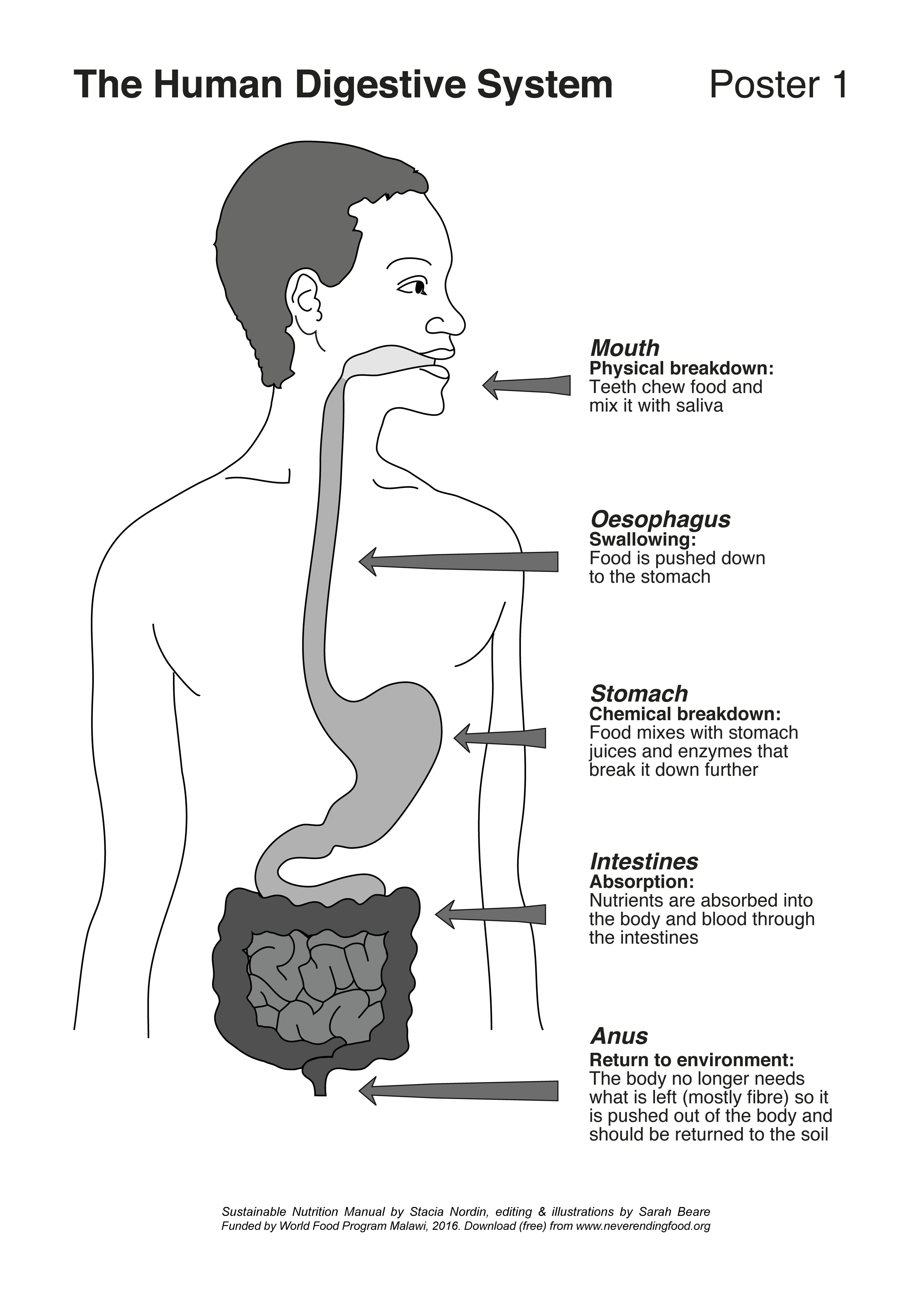Child U2019s Digestive System Manual Guide