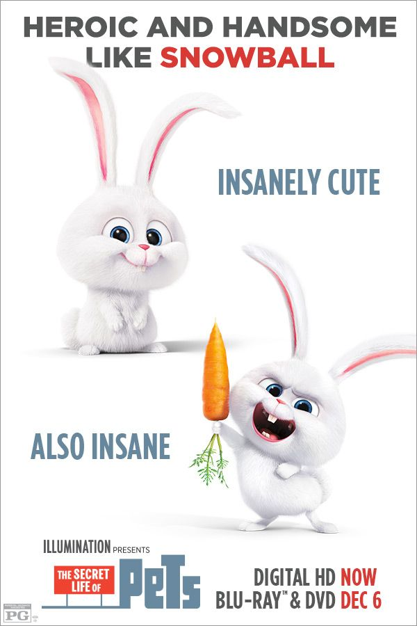 Which Pet Are You Most Like If People Think You Re Crazy They Re Probably Just Jealous Of Your Genius Own The Secret Life Of Pets Secret Life Pets