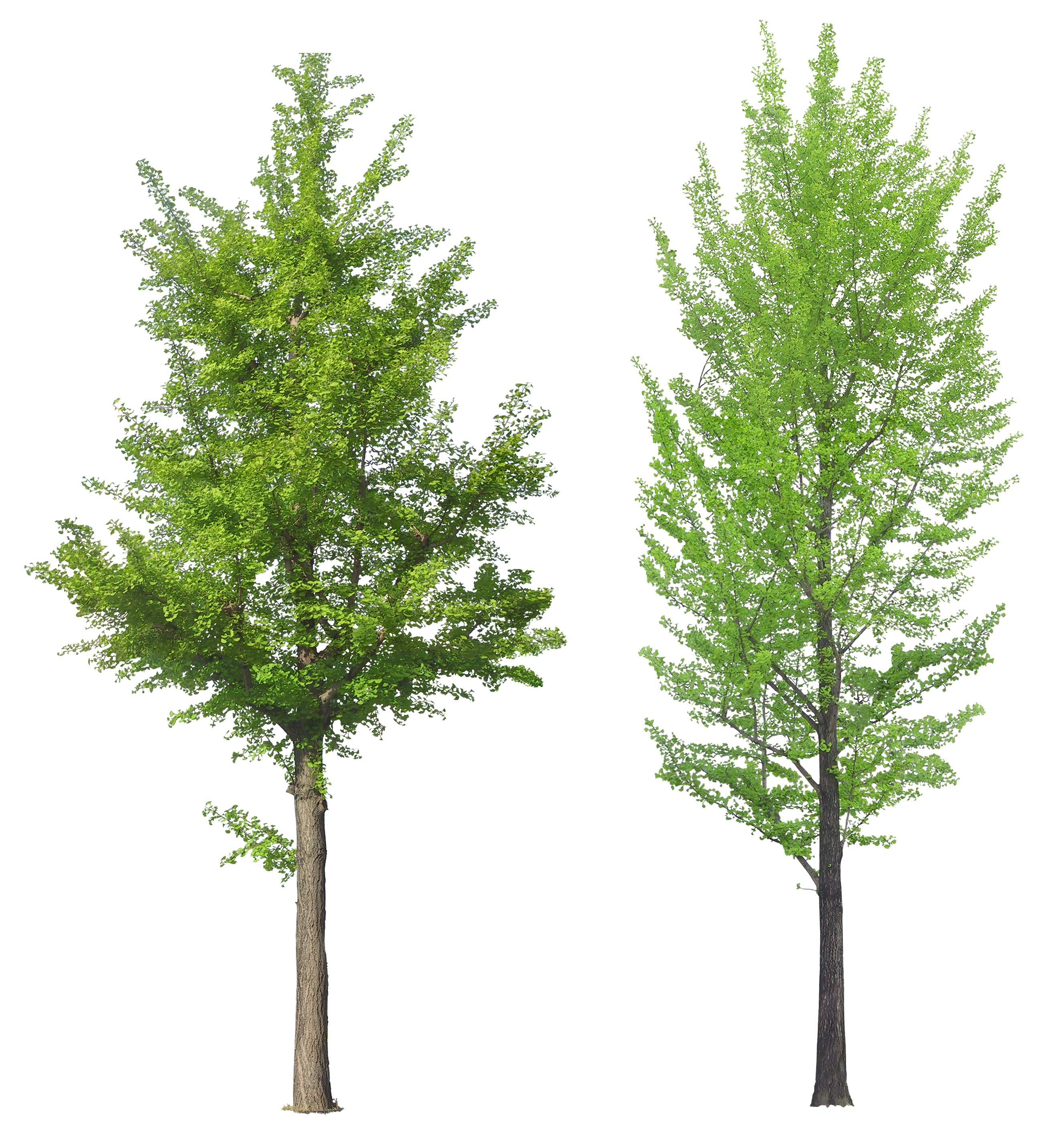 Image Result For Trees Png