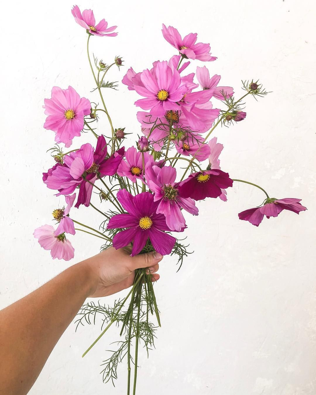 I canut believe how much the cosmos in my garden have grown and how