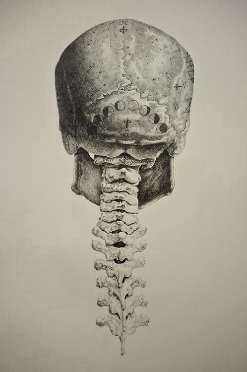 Vintage inspired anatomical drawings with a twist by Andy van Dinh ...