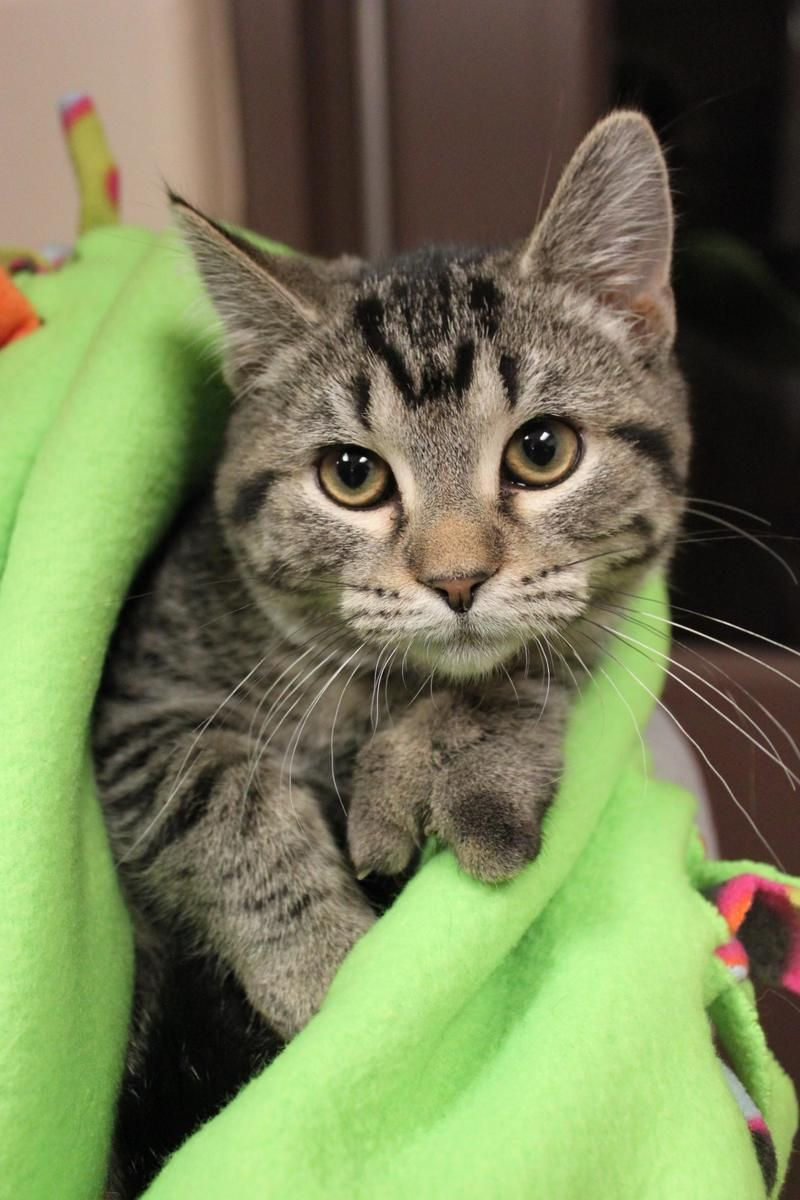 Adopt Rapunzel on ADOP ME PLEASE Cute cats