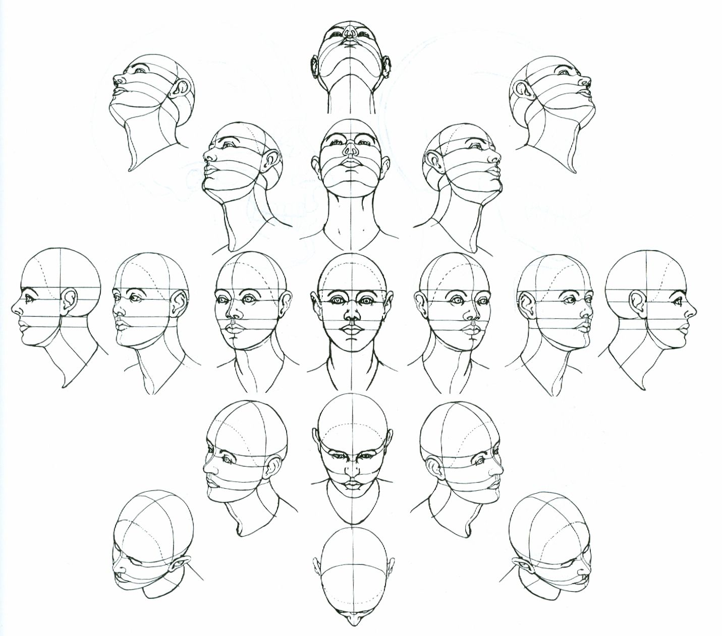 Anatomical Drawings Of Heads Patrick S Free Art Course Lesson 04 Anatomy Exercise H Face Drawing Anatomy Sketches Step By Step Drawing