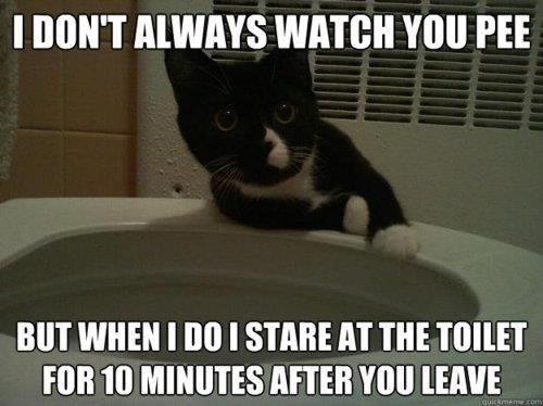 Cat Watch You Pee Funny Cartoons Cats Funny Pictures