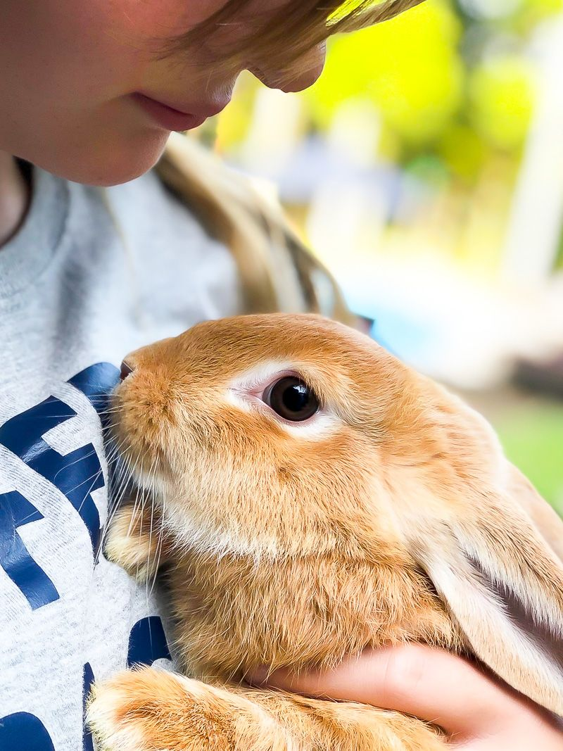 Bunny care 101 and simple tips for a healthy bunny bunny