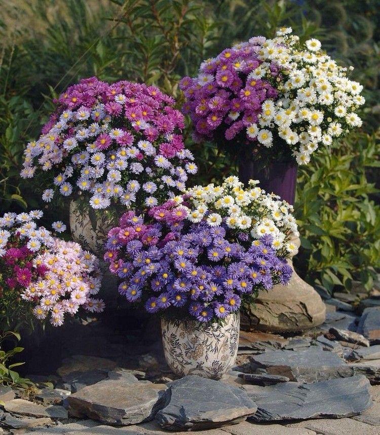 Fleurs D Automne 6 Propositions Exquises Pour Votre Deco Pflanzen Blumen Im Blumentopf Herbstpflanzen