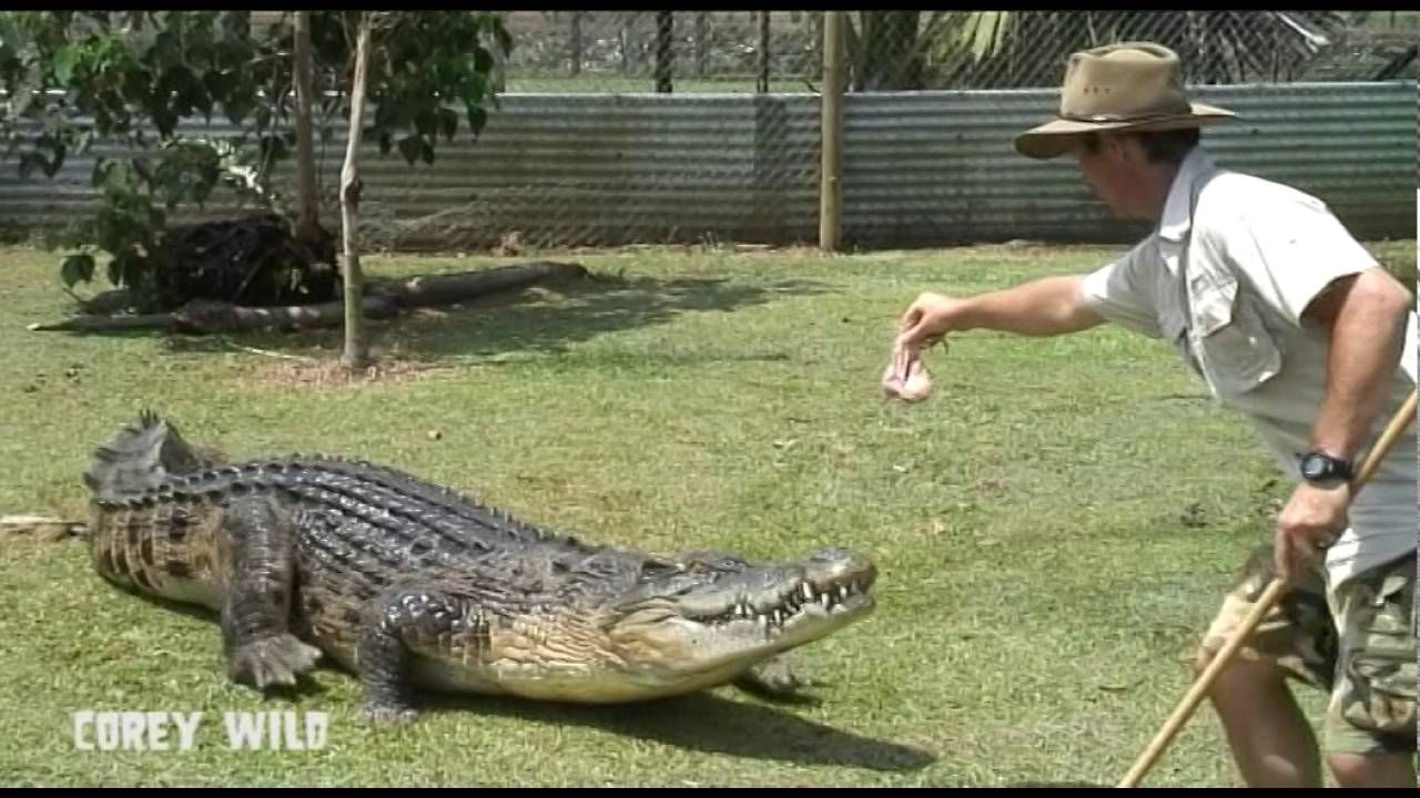Top 10 Worlds Most Dangerous Animals - Crocodiles Pt 3 - Awesome Animals TV