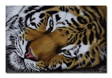 TIGER 23 portrait big cat feline pencil painting Sandrine Curtiss Art Limited Edition Print ACEO by Sandrinesgallery
