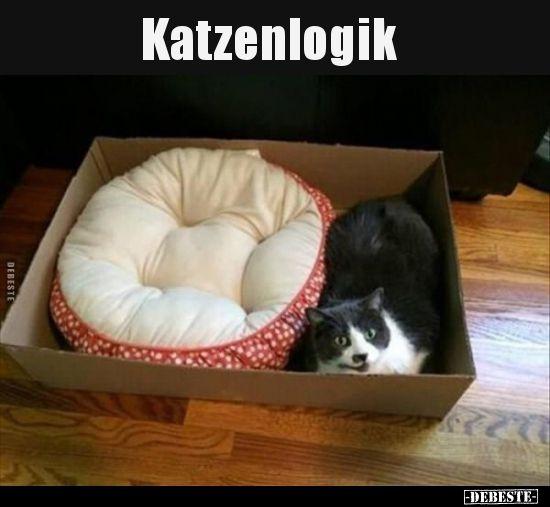 Katzenlogik.. | Lustige Bilder, Sprüche, Witze, echt lustig