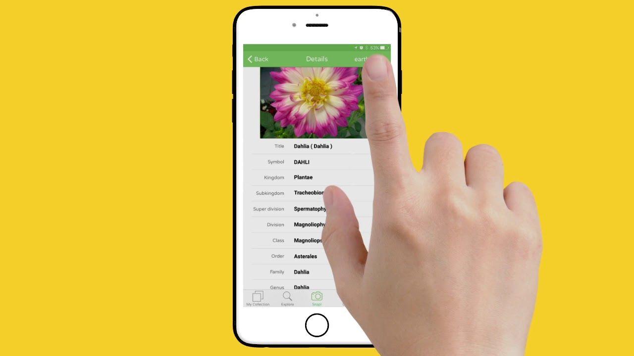 Identify plants with the PlantSnap app Identify plant