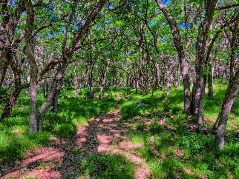 Hawks Nest Carrington Nd North Dakota Beautiful Places Burr Oak