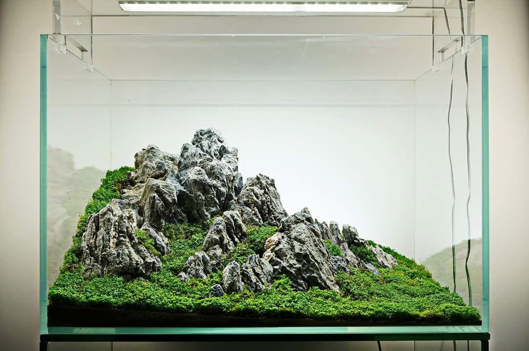 Préparation d'un mountain scape / iwagumi 96eb2c60c7fbe3e10931144fbd31efa2