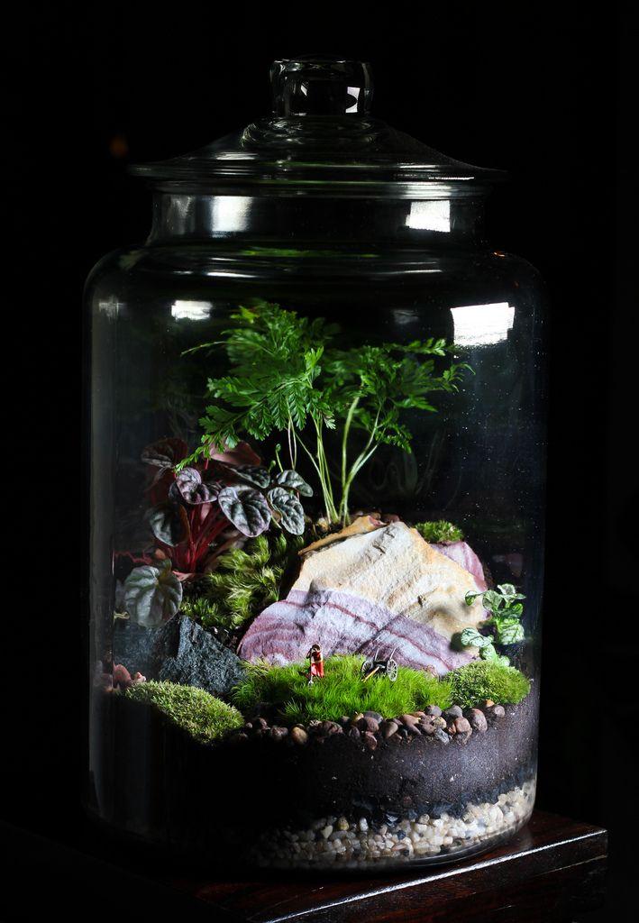 Terrarium Jar Succulent, Large Glass Terrarium Jars