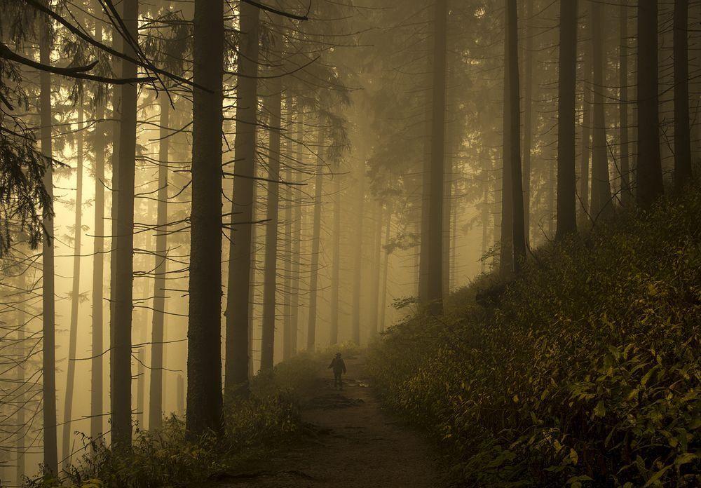 #Forest https://t.co/PcM43Ib9tJ https://t.co/OrissJEJ0Z