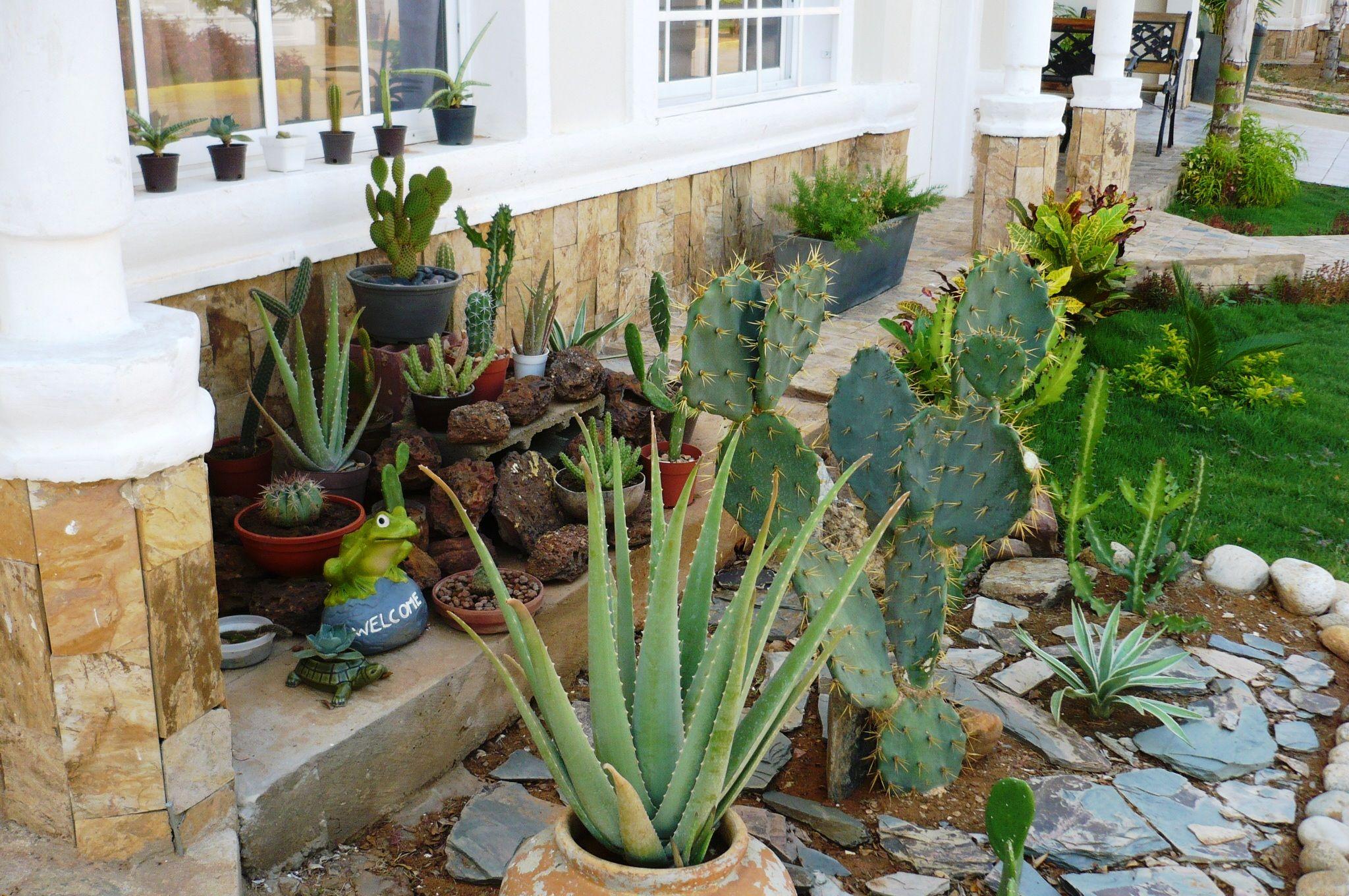 mi jardin xerofilo cactus y suculentas pinterest