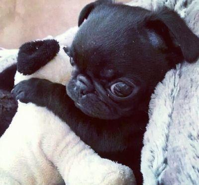 4 Tumblr Mascotas Bonitas Animales Bebe Bonitos Animales