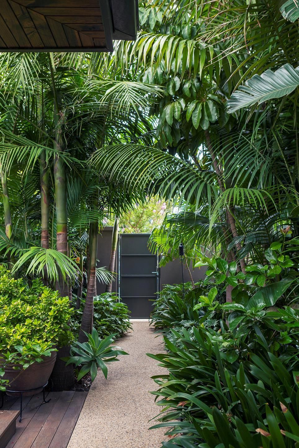 Landscaper John Couch Has Created A Tropical Garden In Melbourne S South East By Mimicking A T Tropical Garden Design Tropical Landscaping Backyard Landscaping