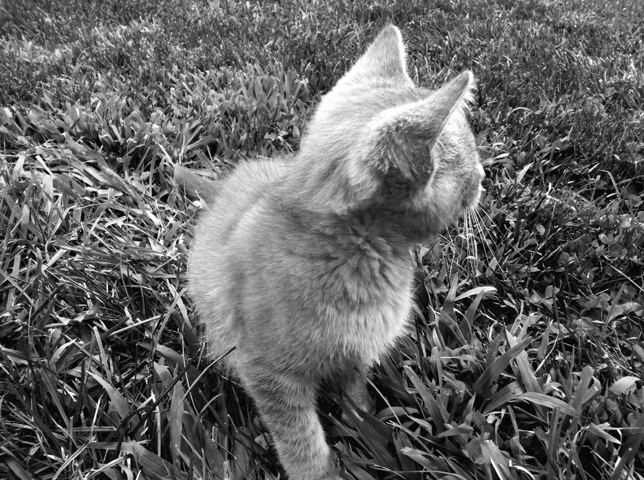 Kitten love!